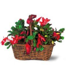 Christmas Cactus Basket