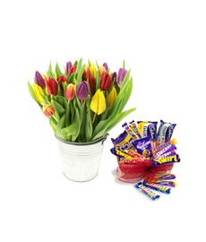 Tulips & Cadbury Chocolate Gift Box