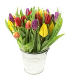 .Spring Tulips in Zinc Pot