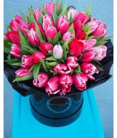 Cherry Blossom Tulips